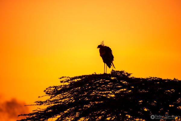 10_PeterBentsen-Kenya18-7623