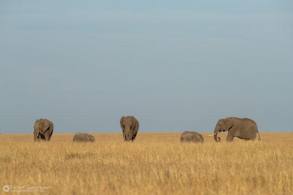 12_PeterBentsen-Kenya18-9051