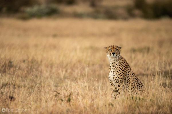 16_PeterBentsen-Kenya18-1816