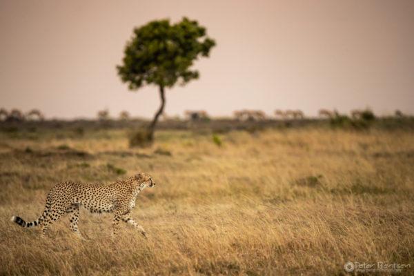 1_PeterBentsen-Kenya18--2