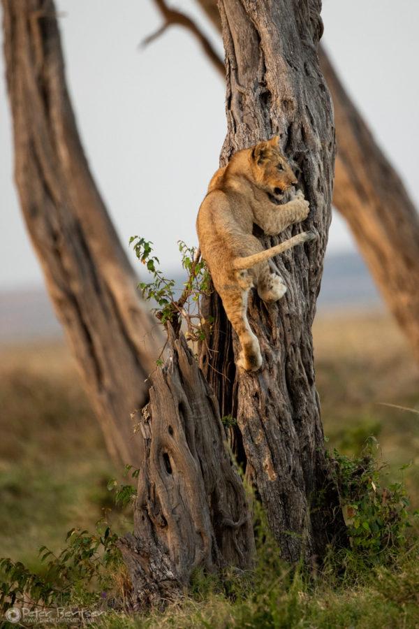 20_PeterBentsen-Kenya18-0179