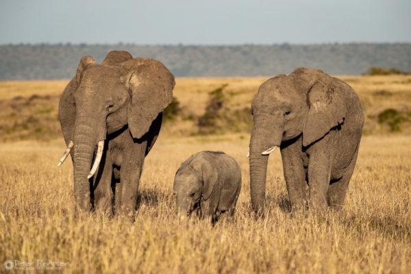 33_PeterBentsen-Kenya18-9034