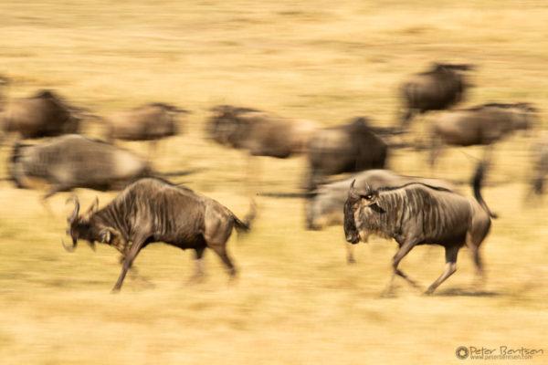 36_PeterBentsen-Kenya18-9782