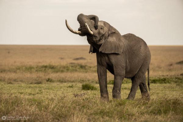 37_PeterBentsen-Kenya18-9994