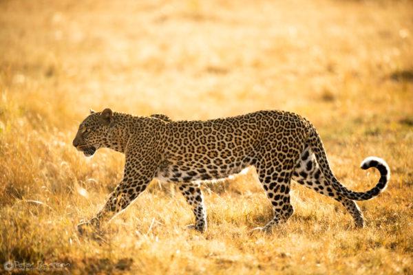38_PeterBentsen-Kenya18-2127