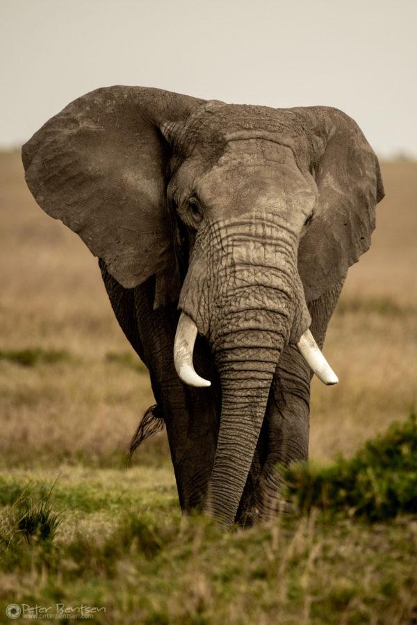 3_PeterBentsen-Kenya18-9981