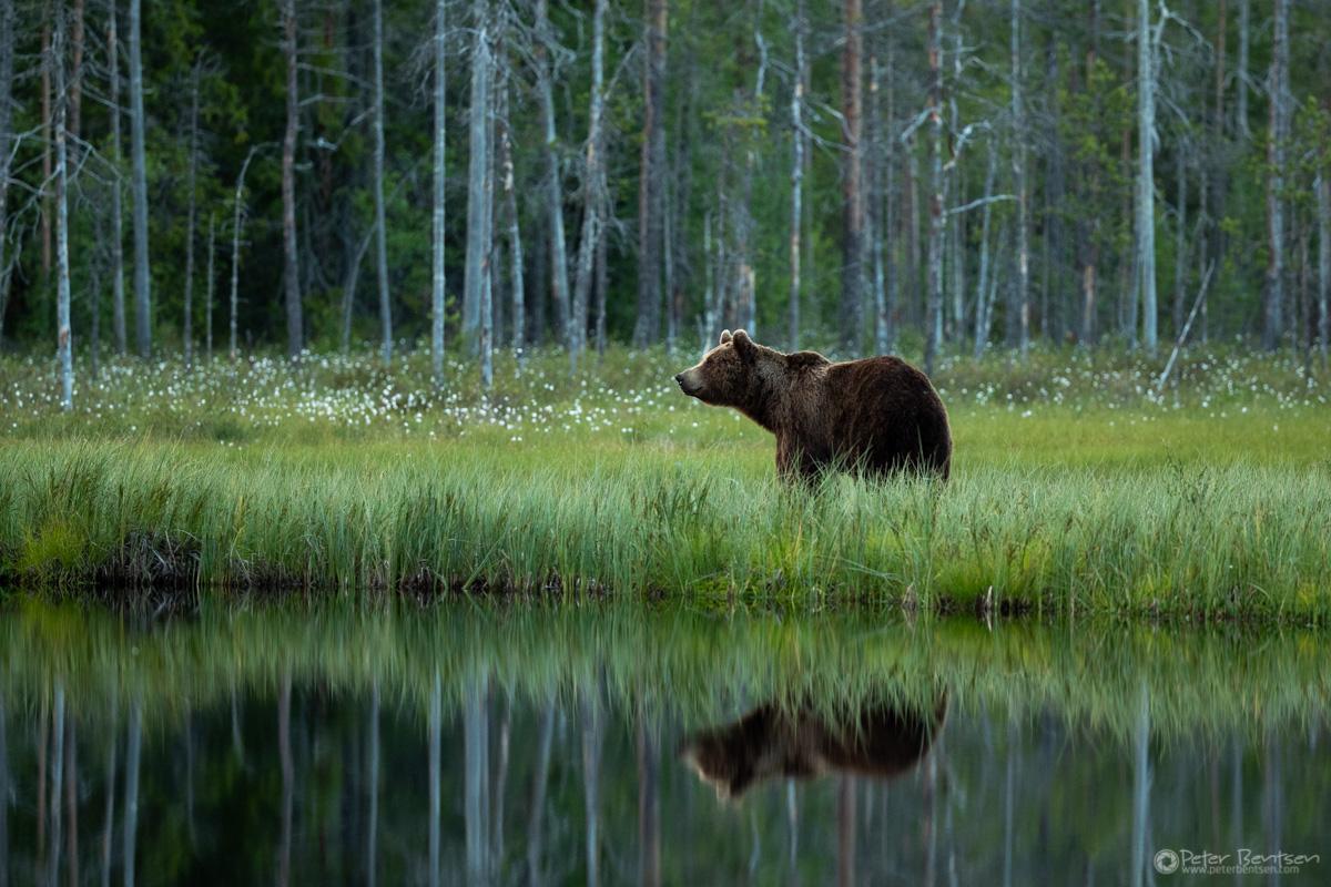 Brownbears-5974