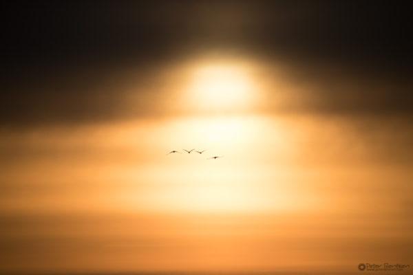 Cranes-2018-7908