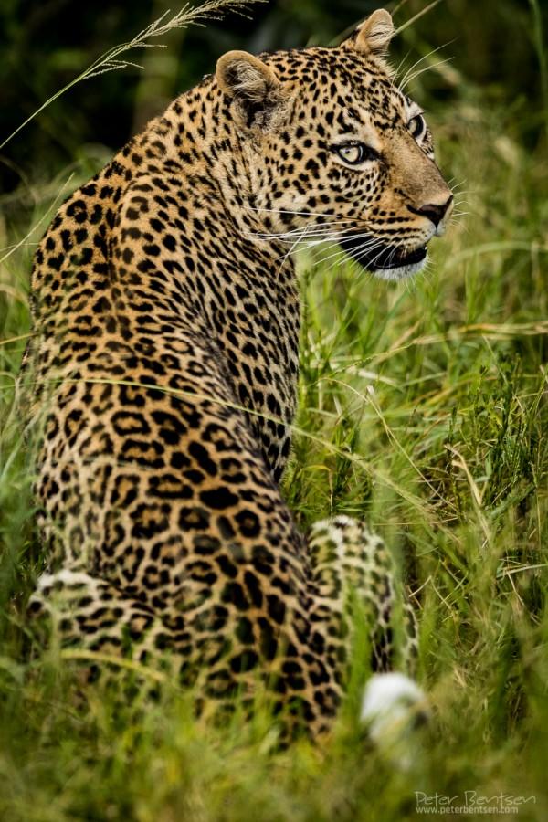 Kenya16-0045