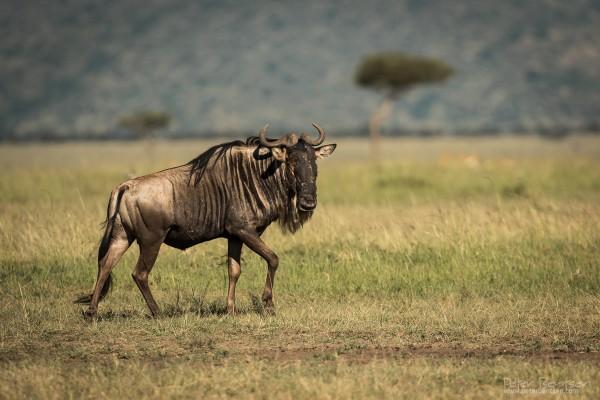 Kenya16-4407