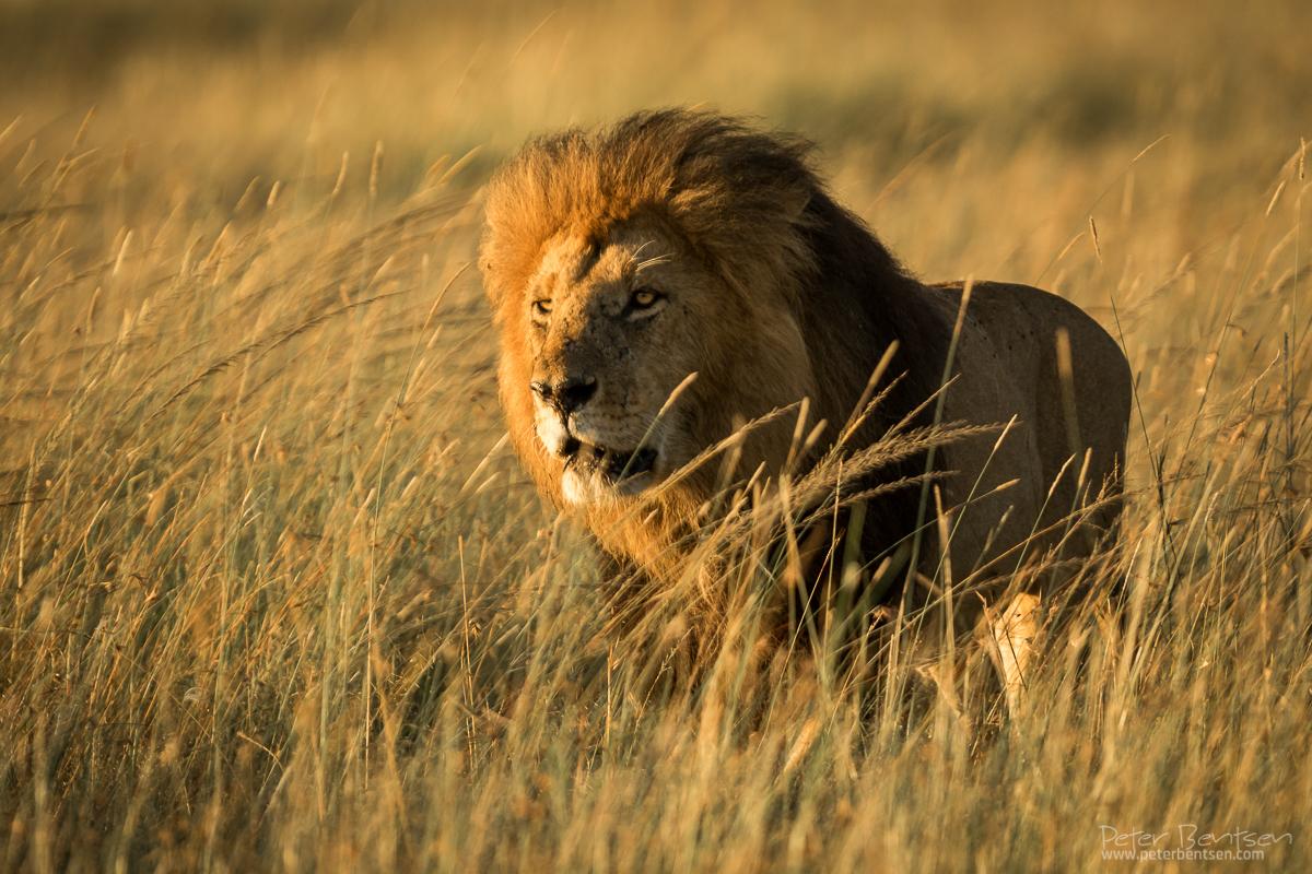 Kenya16-4868