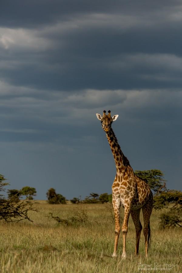 Kenya16-8399
