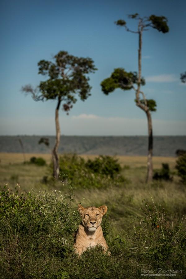 Kenya16-9080