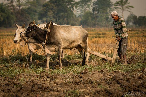 Nepal16-0709