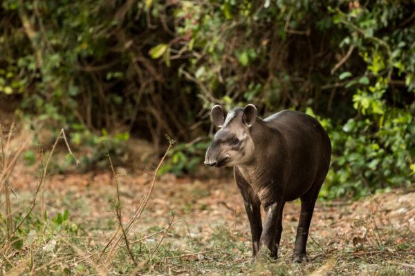 Pantanal-2569