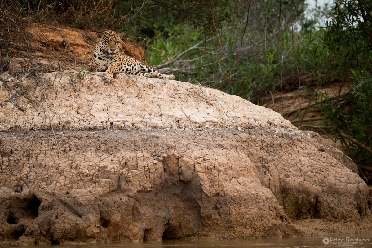 Pantanal-3074