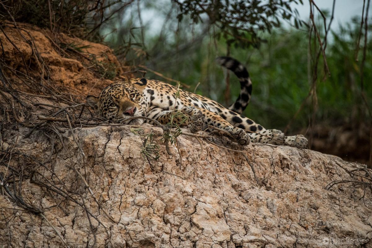 Pantanal-3137