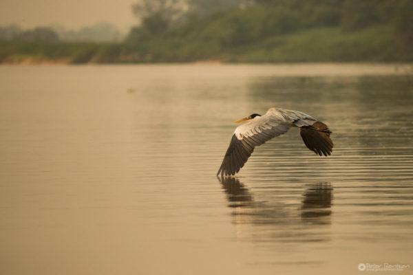 Pantanal-3214