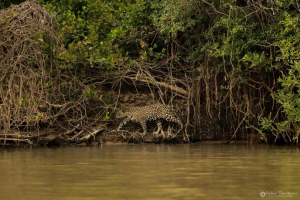 Pantanal-3237