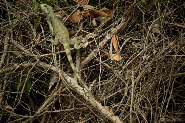Pantanal-3545