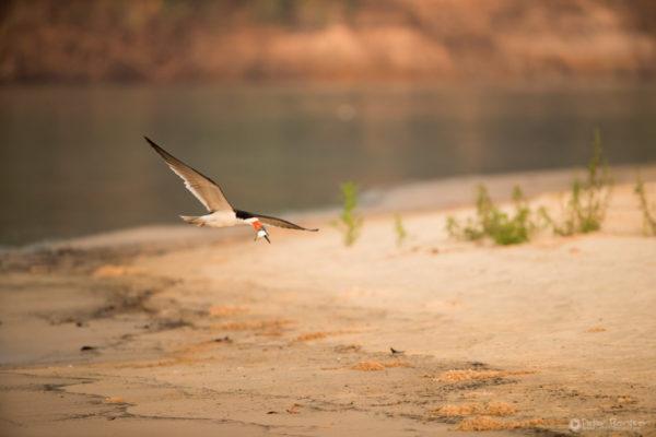 Pantanal-3866