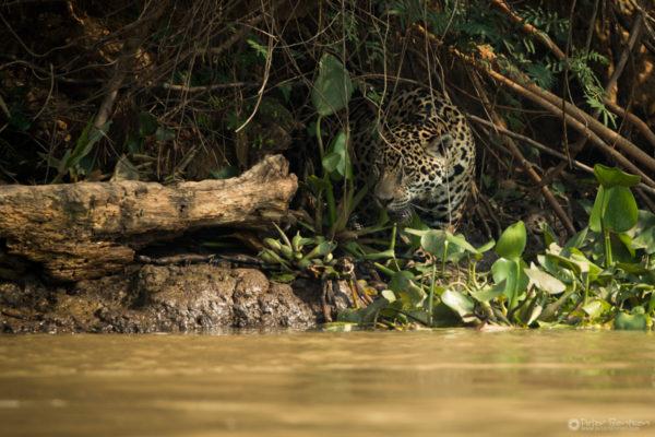 Pantanal-4244