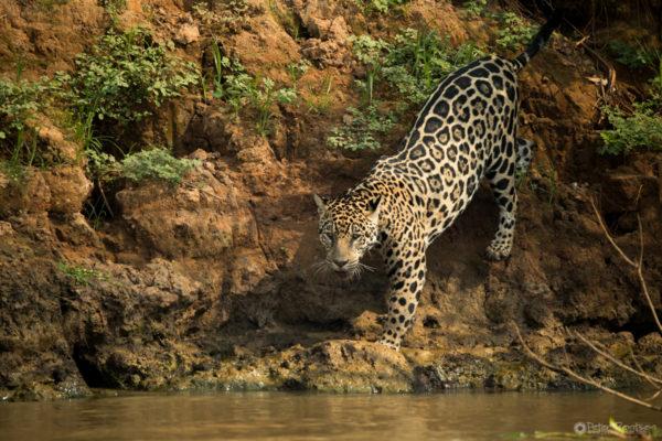 Pantanal-4285