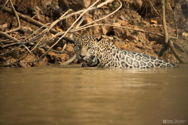Pantanal-4343