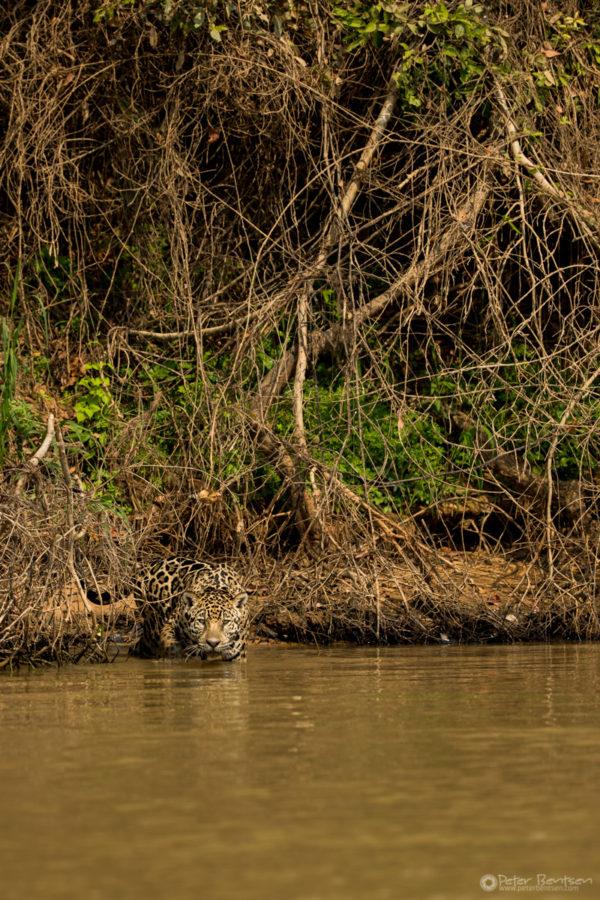 Pantanal-4438
