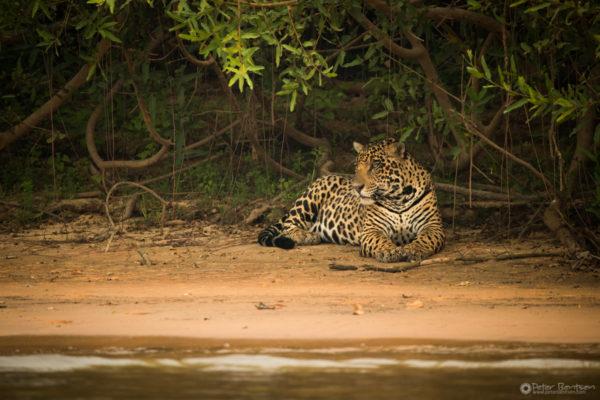 Pantanal-4537