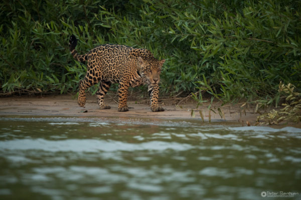 Pantanal-4725