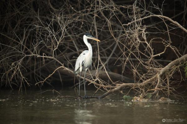 Pantanal-4825