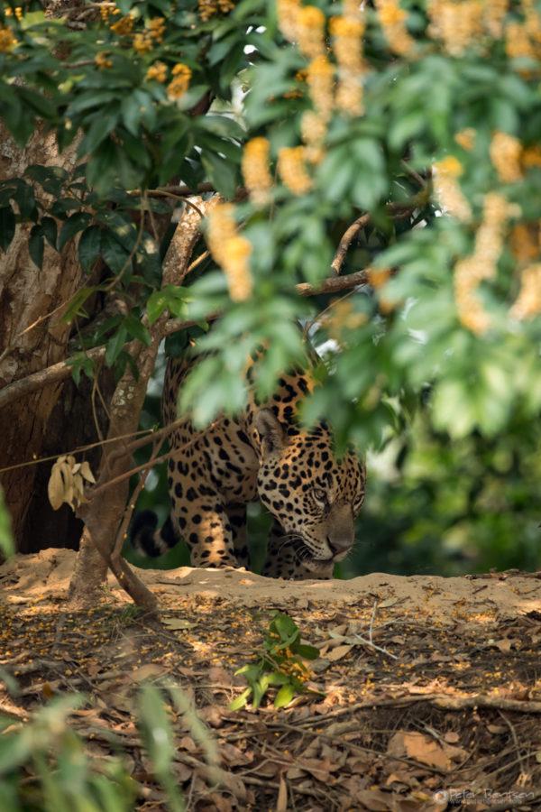 Pantanal-5004