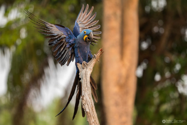 Pantanal-5138