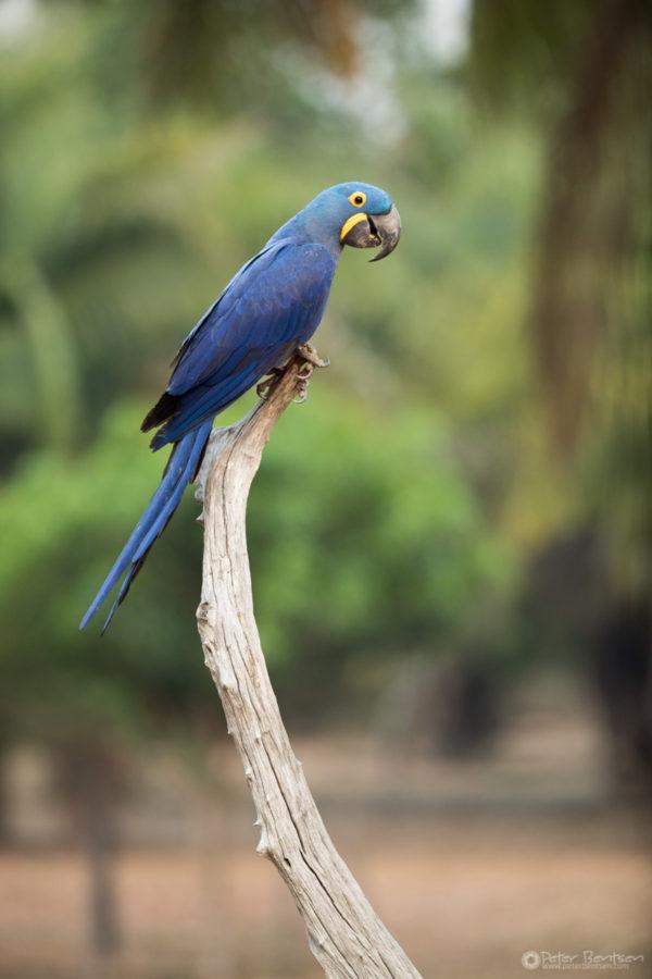 Pantanal-5180