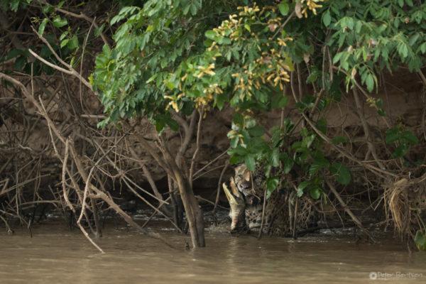 Pantanal-5215