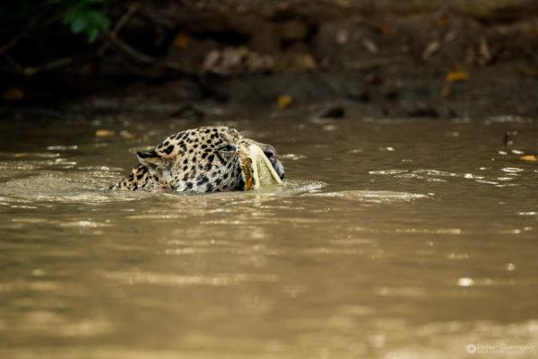 Pantanal-5239