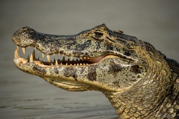 Pantanal-5355