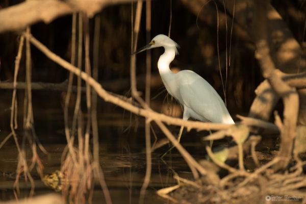 Pantanal-5647