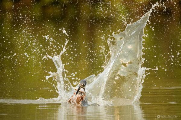 Pantanal-5852