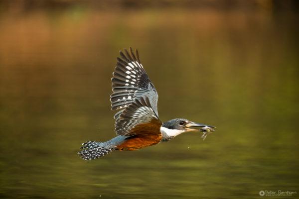 Pantanal-5865