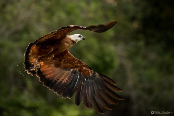 Pantanal-5979