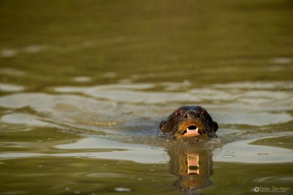 Pantanal-6267