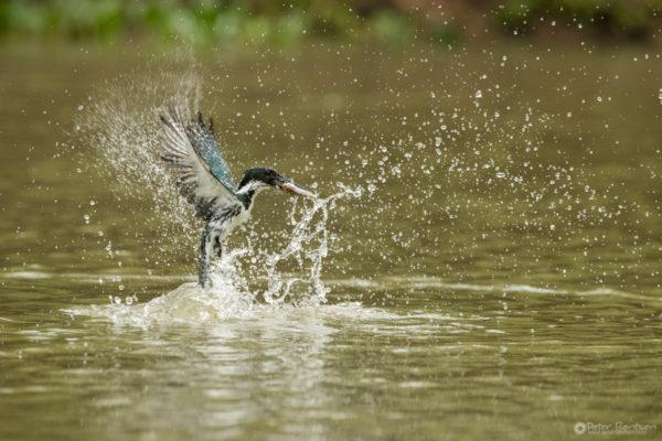 Pantanal-7633