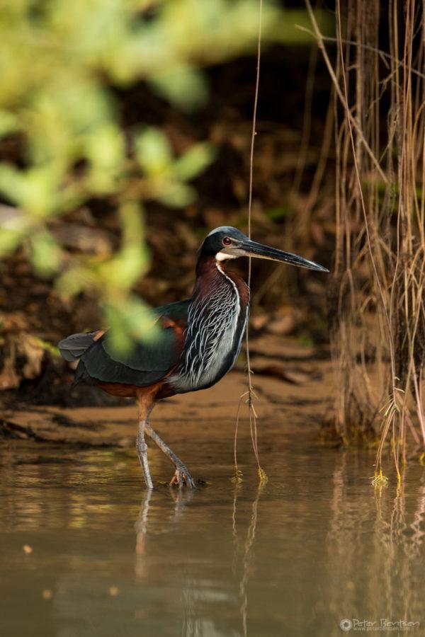 Pantanal-7763