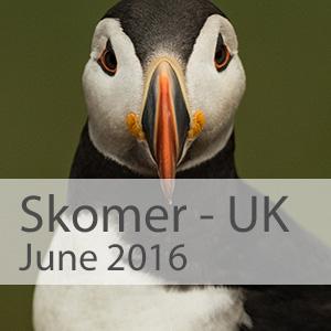 Skomer-2015